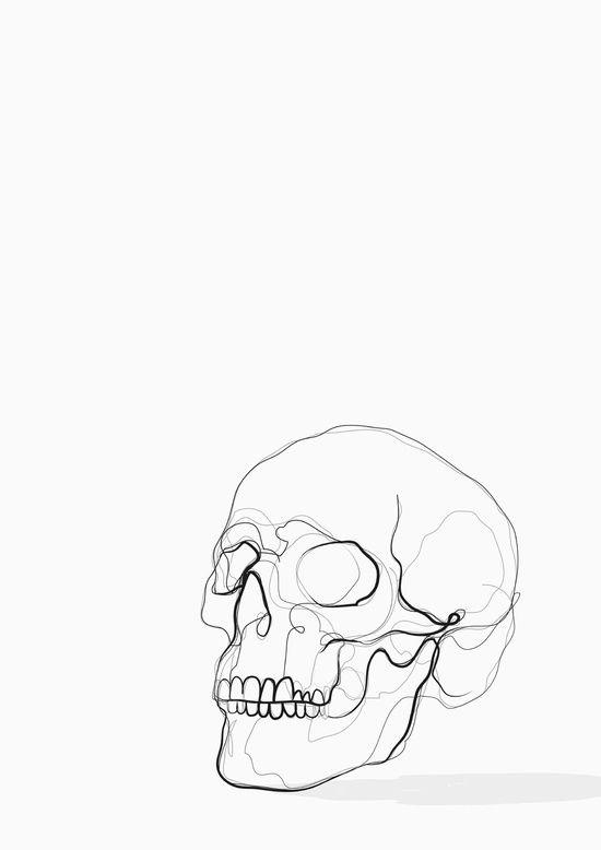 Skull Line Drawing Art Print Kerryn Kisbey-Green