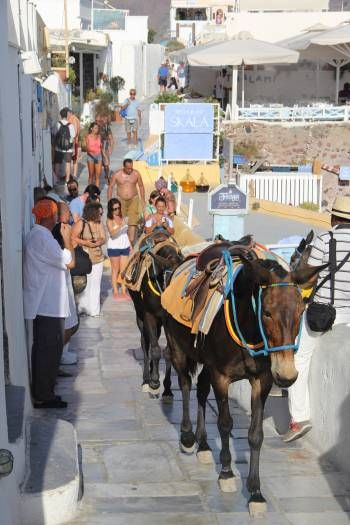 EVI S. - UNITED STATES ΕΚΠΡΟΣΩΠΟΣ ΤΗΣ ΕΛΛΑΔΑΣ Traditional Greek donkeys in santorini. So much love for these animals and all the walking they have to do. I feel for these animals.