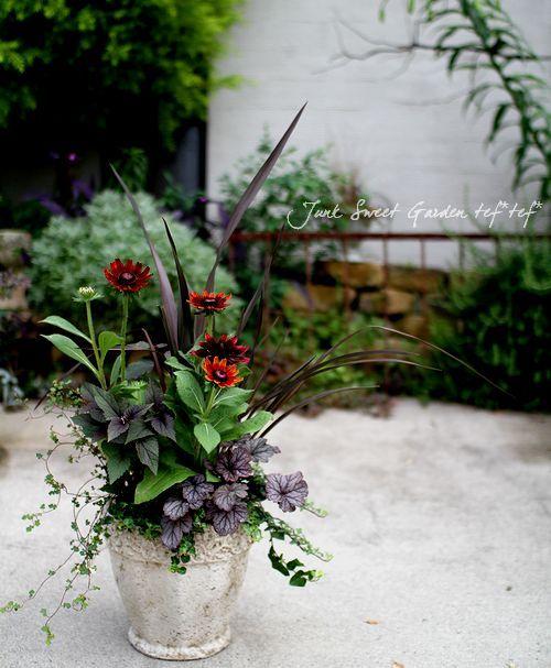 ルドベキア『チェリーブランデー』の花色が引き立つように。『チェリーブランデー』は草丈が高めなので、ダークな葉色のニューサイランで流れを出して。