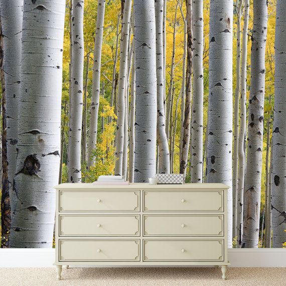 17 best ideas about birch tree mural on pinterest babies for Birch tree wallpaper mural