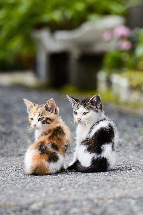 A calico kitten and a dotted friend
