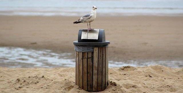 #inquinamento #mare #bandiereBlu #marePulito #golettaVerde #Legambiente