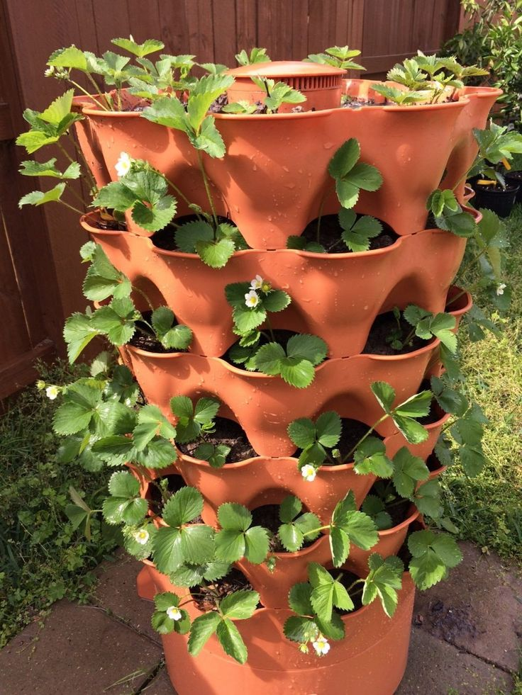 Maybe now I can start a herb garden with this. Garden Tower 2 planted with strawberries