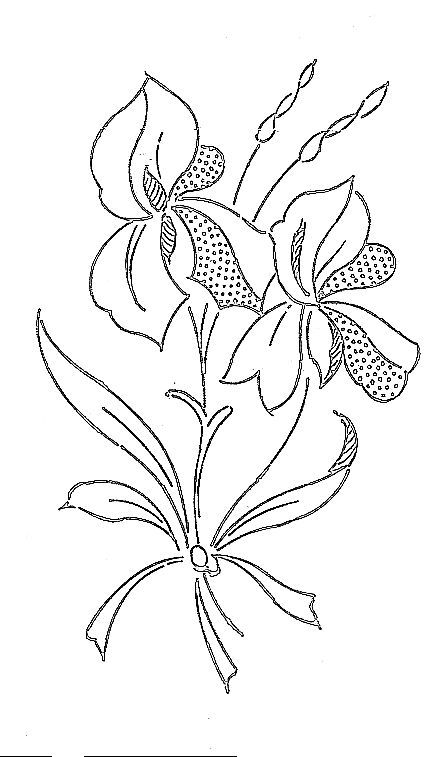 Iris, dessin