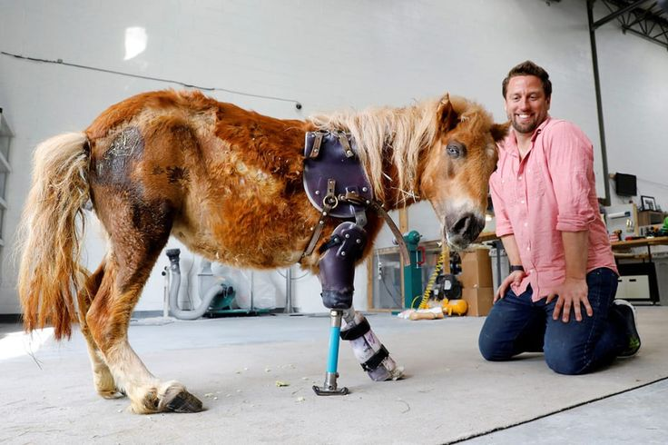 Orthotist Derrick Campana kneels beside Angel Marie, a pony using prostheses he made with the help of Plastics Make it Possible at Animal Ortho Care in Sterling, Virginia, on March 27.