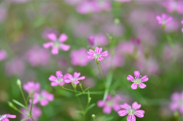 Скачать обои растение, луг, лепестки, сад, макро, раздел цветы в разрешении 2048x1360