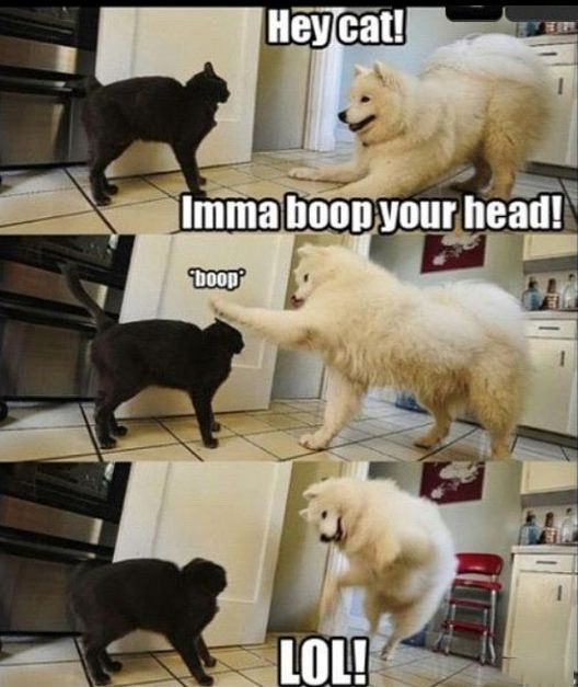 Funny pet reactions 🐾