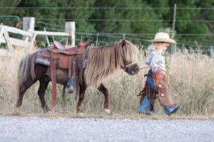 Make Horse Safety a Priority