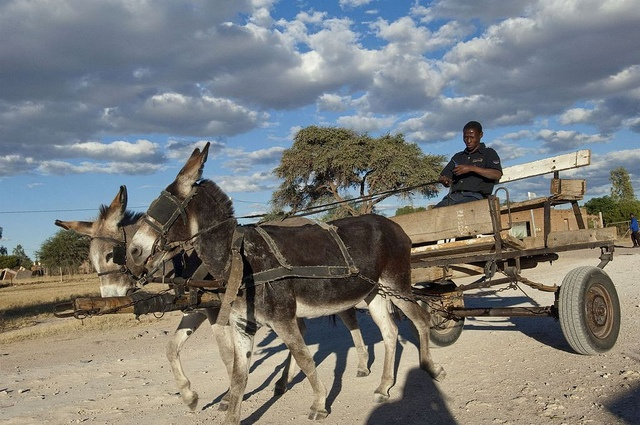 Donkey cart, Northern Cape by South African Tourism, via Flickr