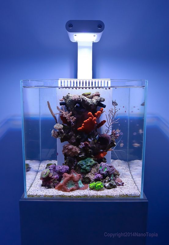 162 best images about nano reef on pinterest for Aquarium nano marin