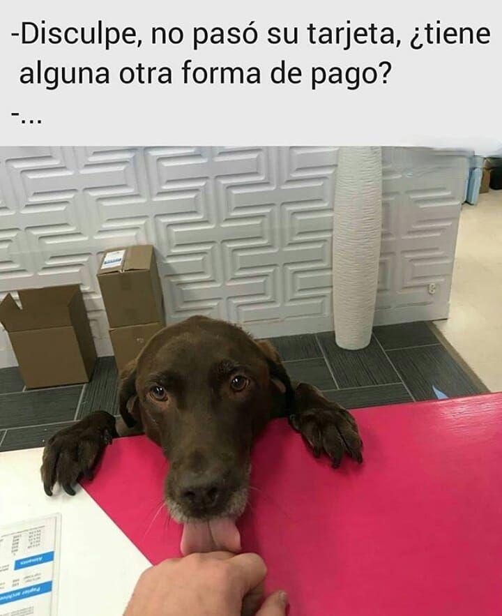 601 Me Gusta 3 Comentarios Mister Firulais Mister Firulais Ok En Instagram Asi Quien No Acepta Perros Pe Perros Frases Perros Mascotas