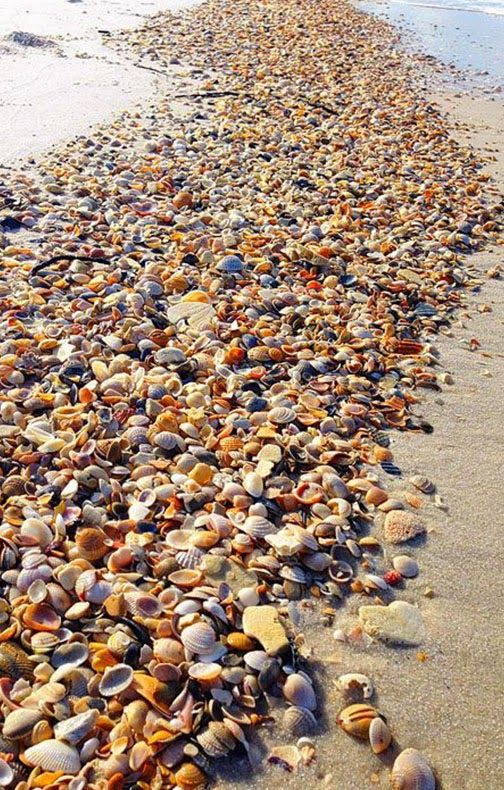 Shell Beach Sanibel Island, Florida Sanibel was so beautiful, I definitely want…