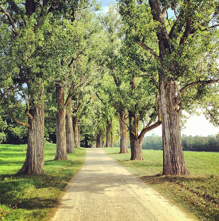 Poplar Drive at Shelburne Farms