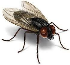 Em determinadas épocas do ano, com aumento das temperaturas e da umidade o número de mosquitos aumenta. Até uma simples poça d'água junta mosquitos na pia, no chão e nos balcões da cozinha. No verão a casa de praia mais parece um criatório de mosquitos: peixe, churrasco, migalhas e restos de…