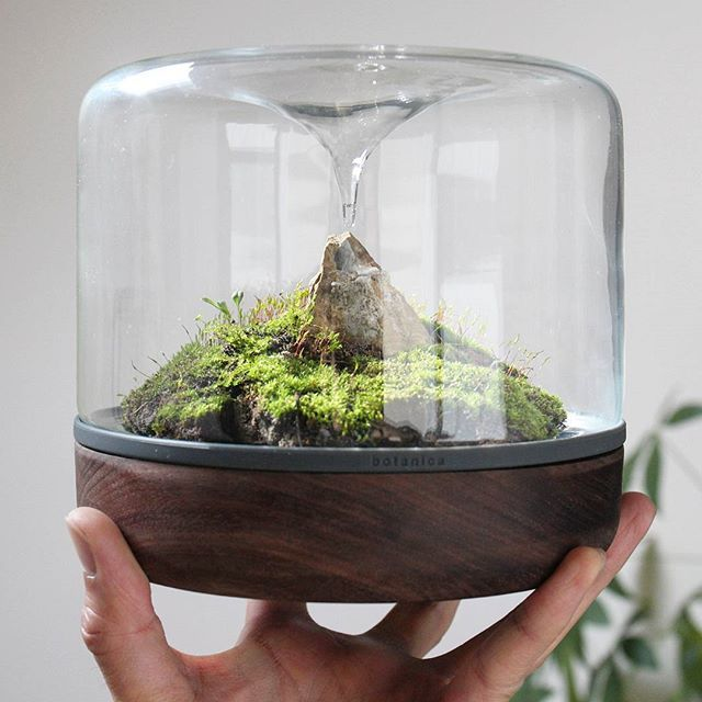 Instagram media by houseplantjournal - Sanctuary M Rainforest by @botanica.boutique with moss and styling by @teenytinyterra. Thank you, both! Head over to Botanica Boutique's website and use my code: HPJ10 for 10% off  ~ ~ #moss #mossarium #terrarium #botany #natureinthehome #plantstyling #houseplantjournal #plants #homedecor #botanical #greenthumb #greenery #houseplantclub #greenfingers #greeninterior #plantlove #natureinspired #naturegram #plantstagram #urbanjunglebloggers #horticulture