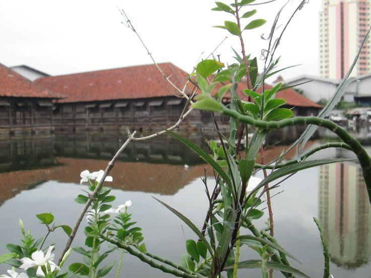 Gudang Kayu