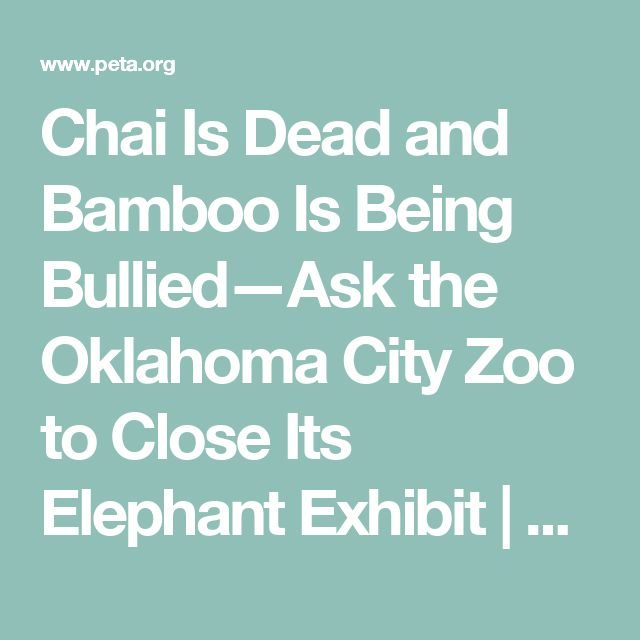 Chai Is Dead and Bamboo Is Being Bullied—Ask the Oklahoma City Zoo to Close Its Elephant Exhibit | Action Alerts | Actions | PETA
