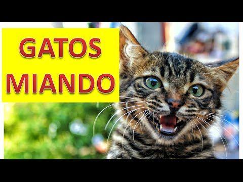 Gato Miando - Tem Para Todo os Gostos https://youtu.be/alAf81YcRcU