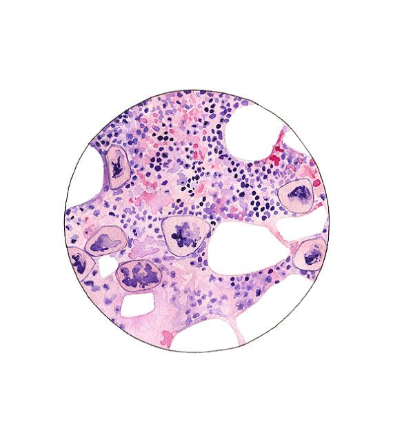 Bone Marrow 2 Histology Science Art Biology Art por sandraculliton
