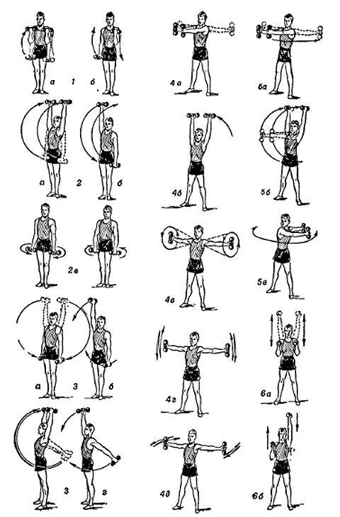 Картинки по запросу упражнения с гантелями для рук