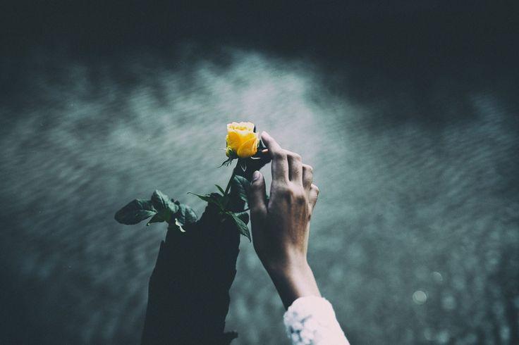 flor, planta, pétalos, mano, caricia, 1708212157