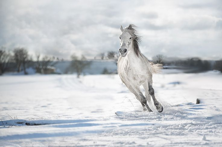 Zauberland – J. Salm Photography