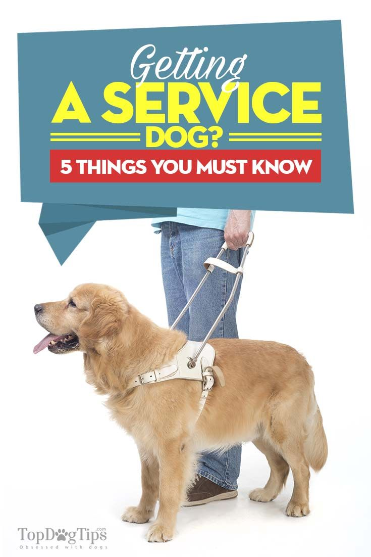 64 best service dogs at work images on pinterest service dogs getting a service dog here are 5 things you must know 1betcityfo Images