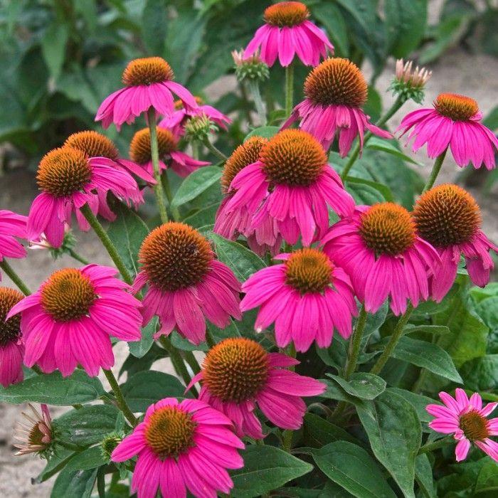 27 best Corner Gardens images on Pinterest | Corner garden ...