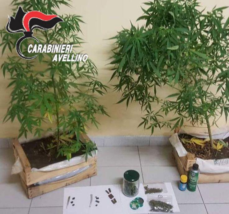 "Montoro, droga: 45enne dal ""Pollice verde"" denunciato dai Carabinieri"