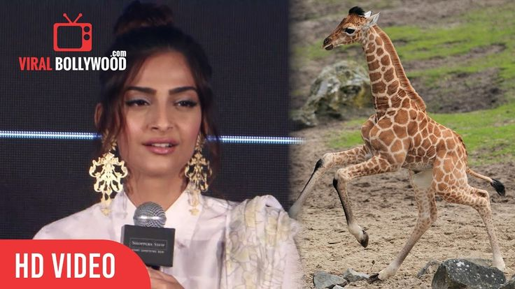 Watch Now 😎!!  Sonam Kapoor Nickname Revealed!  My Father Called me Giraffe Says #SonamKapoor