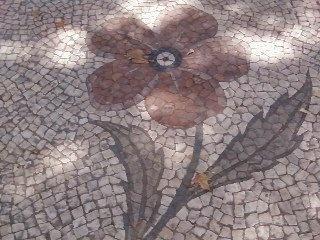 Lisboa, caminhando sobre flores