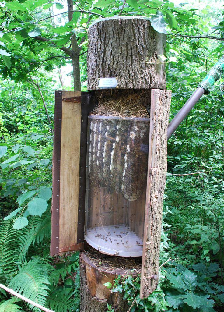 картинки ловушек на пчел один