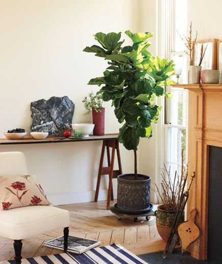 Put a Towering Tree on Wheels  The large, leathery leaves of a tall fiddle-leaf fig can fill (and transform) an empty corner. Make an oversize plant mobile so you can easily roll it out of the way for vacuuming or to protect it from too much sun. All you need is a piece of precut bluestone from a landscaping center set on a wheeled caddie. This dark, cylindrical pot creates a modern