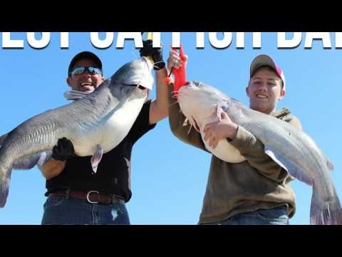 Fishing for Catfish in the USA   Popular Species of Catfish to Catch, Th...