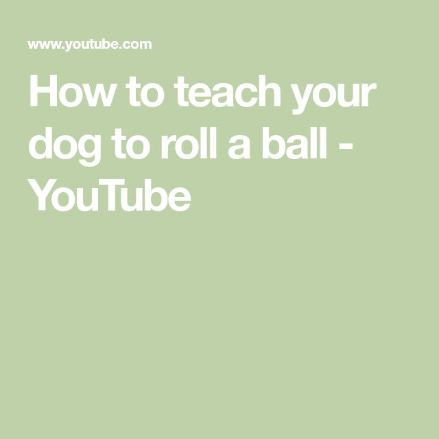 How To Teach Your Dog To Roll A Ball Youtube All Things Dog