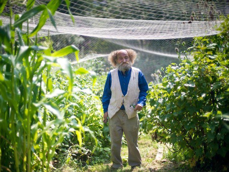 19 best raised garden beds images on pinterest raised for Garden allotment ideas