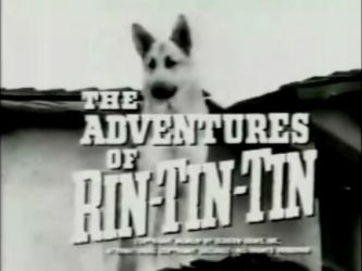 The Adventures of Rin Tin Tin is an American children's television program which originally aired in 166 episodes on ABC from October 1954 until August 1959