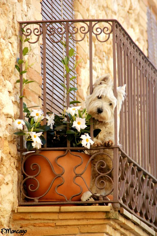 mostly dogs http://vintagehomeca.tumblr.com/post/125367657023/mostlydogsmostly-via-fernando-moncayo