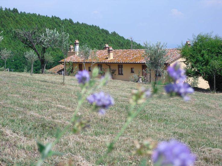 Rural Apt Falco with Pool - Appartamenti in affitto a Vicopisano