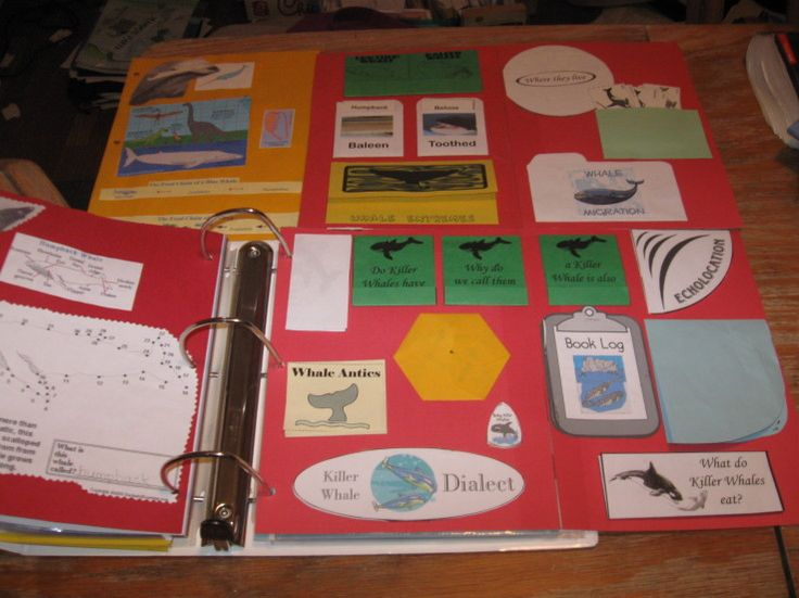 Whales Lapbook; free printables found at Homeschool Share: http://www.homeschoolshare.com/whales.php