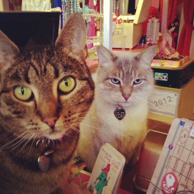 Meow we help you today?