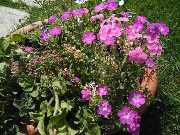 Flores para mi Jardín.
