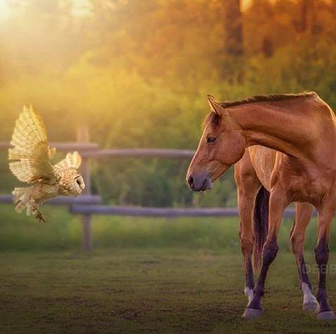 Gufo e Cavallo