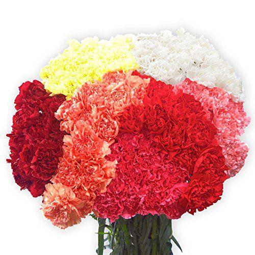 200 Color Carnations | Fresh Flowers Wholesale Express Delivery | Perfect for Birthdays, Anniversary or any occasion. >>> Check out the image by visiting the link.