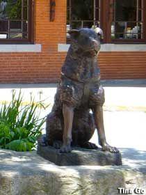 Woonsocket, RI - Statue of Hachiko, Faithful Dog from Richard Gere's movie