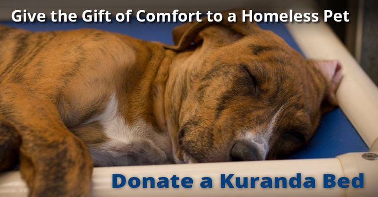 Donate one of Kuranda's high quality, durable dog beds to your local shelter.
