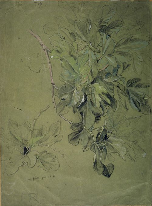 colourthysoul:  Frederic James Shields - Study of a Branch of Fig Leaves (ca. 1890-1910)