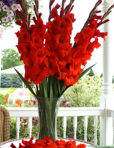 Do you like gladiolus? Would make a simple bouquet for you