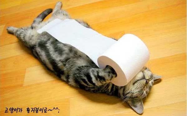 toilet paper hanger