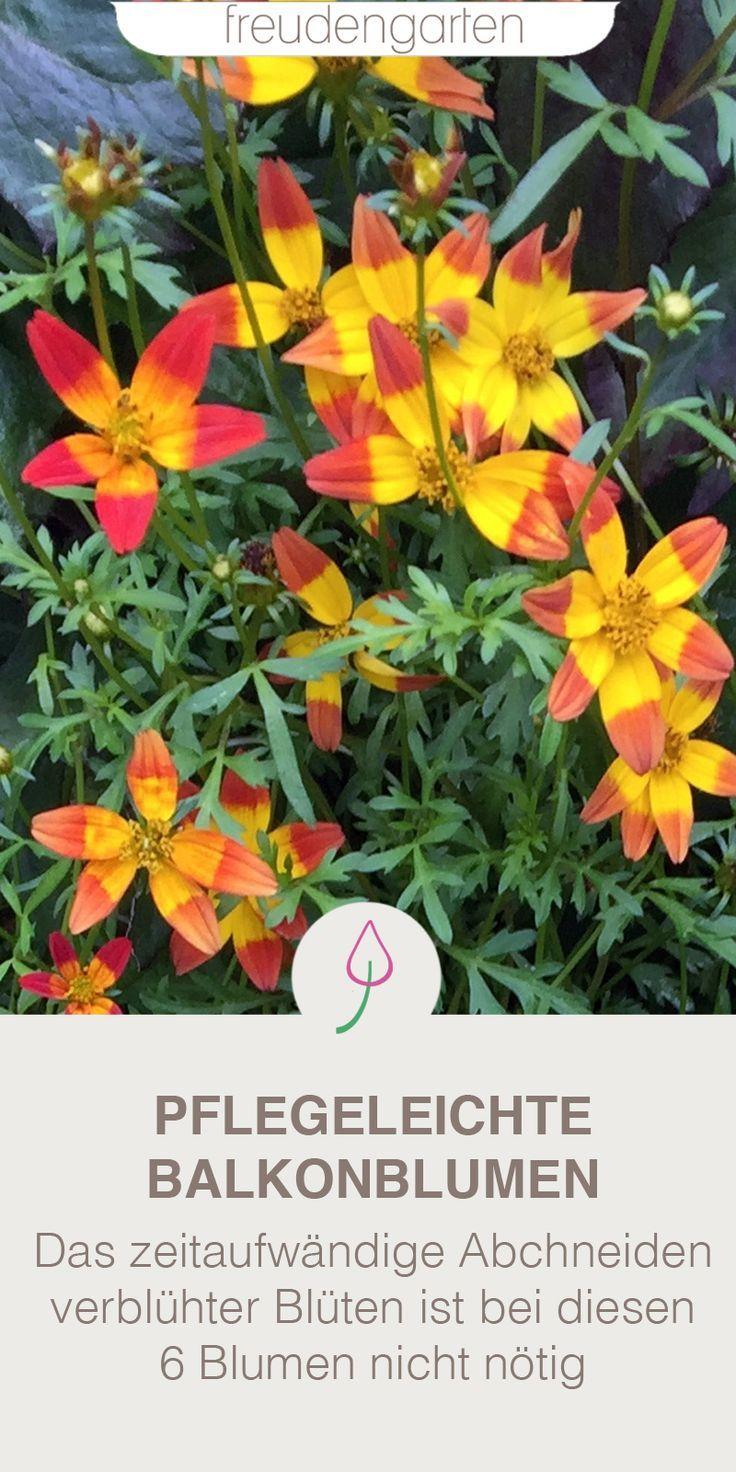 6 pflegeleichte Balkonpflanzen Balkon pflanzen, Pflanzen